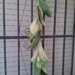 hojas secando