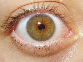 hipertension ocular por esteroides